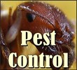 pest and gopher control, pest control, pest and spider exterminators