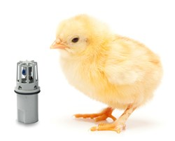 Picture showing the I7000 RH and temperature sensor next to a young chick