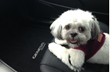 McGrath City Hyundai Hosts Adopt-a-Pet Day Saturday 11/16/13