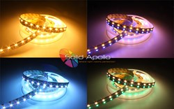 RGB-W Color Changing and Warm White Strip Solid Apollo