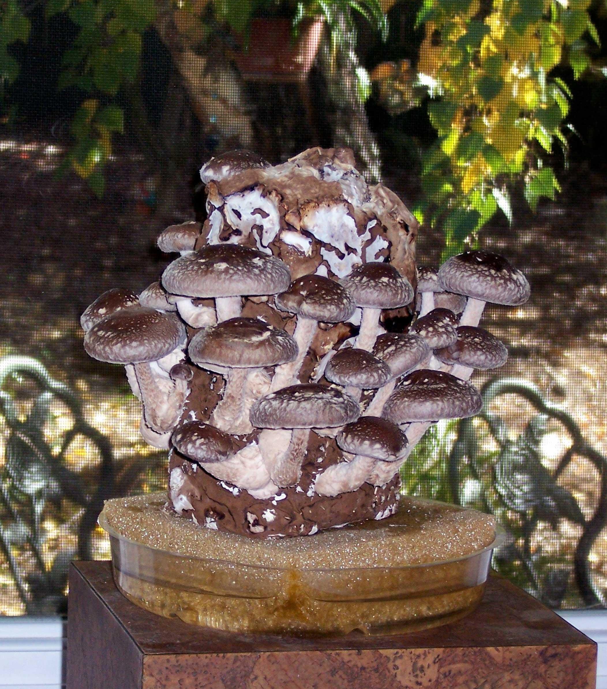 Gourmet Mushroom Products Revamps Indoor Mushroom Kits