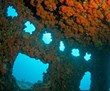 Scuba Dive the Florida Keys Reefs
