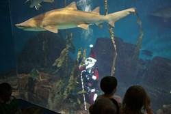Scuba Santa with shark at Maritime Aquarium