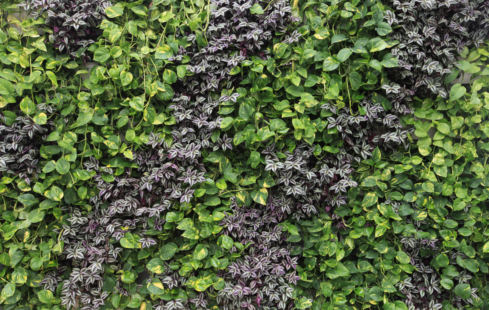 Introducing livewall indoor the drip free version of for Living wall texture