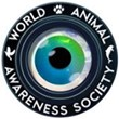 Stray Proud Video Contest Launched to Support the American Strays...