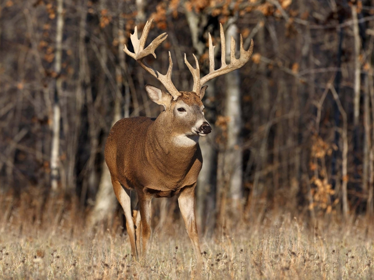Best High Fence Whitetail Deer Hunting in America Now ...