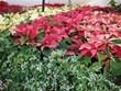 City Floral Garden Center | Holiday Garden & Home Decor | Denver, CO