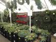 City Floral Garden Center | Holiday & Garden Gift Shop | Denver, CO