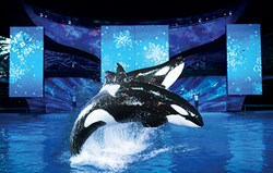 Shamu® Christmas Miracles at SeaWorld Orlando