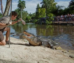 Naples Zoo Keeper Provides a Turkey Dinner to one of the Giant Reptiles in Alligator Bay.