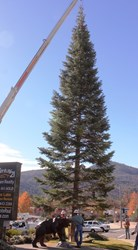 Oakhurst Christmas Tree