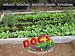 An example of tons of produce planted in a Doc's Raised Garden Kit