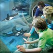 Ripley's Gatlinburg Aquarium is just one of the many kid friendly things to do in Gatlinburg included in Jackson Mountain Homes guide to the Smokies.