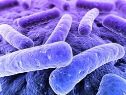 Legionella Control