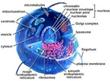 Biology @ EurekaMag.com