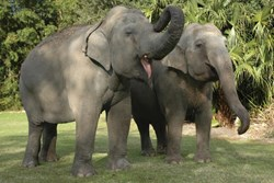 photo of Audubon Zoo Elephants