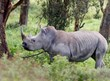 Rhino Conservation to Be an Ongoing Priority for Goway Travel