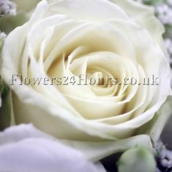 A White Rose for Nelson Mandela