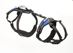 pet, harness, dogs, aging, dog, pet product