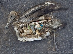 This image depicts the actual stomach contents a baby albatross in one of the world's most remote marine sanctuaries, more than 2000 miles from the nearest continent.