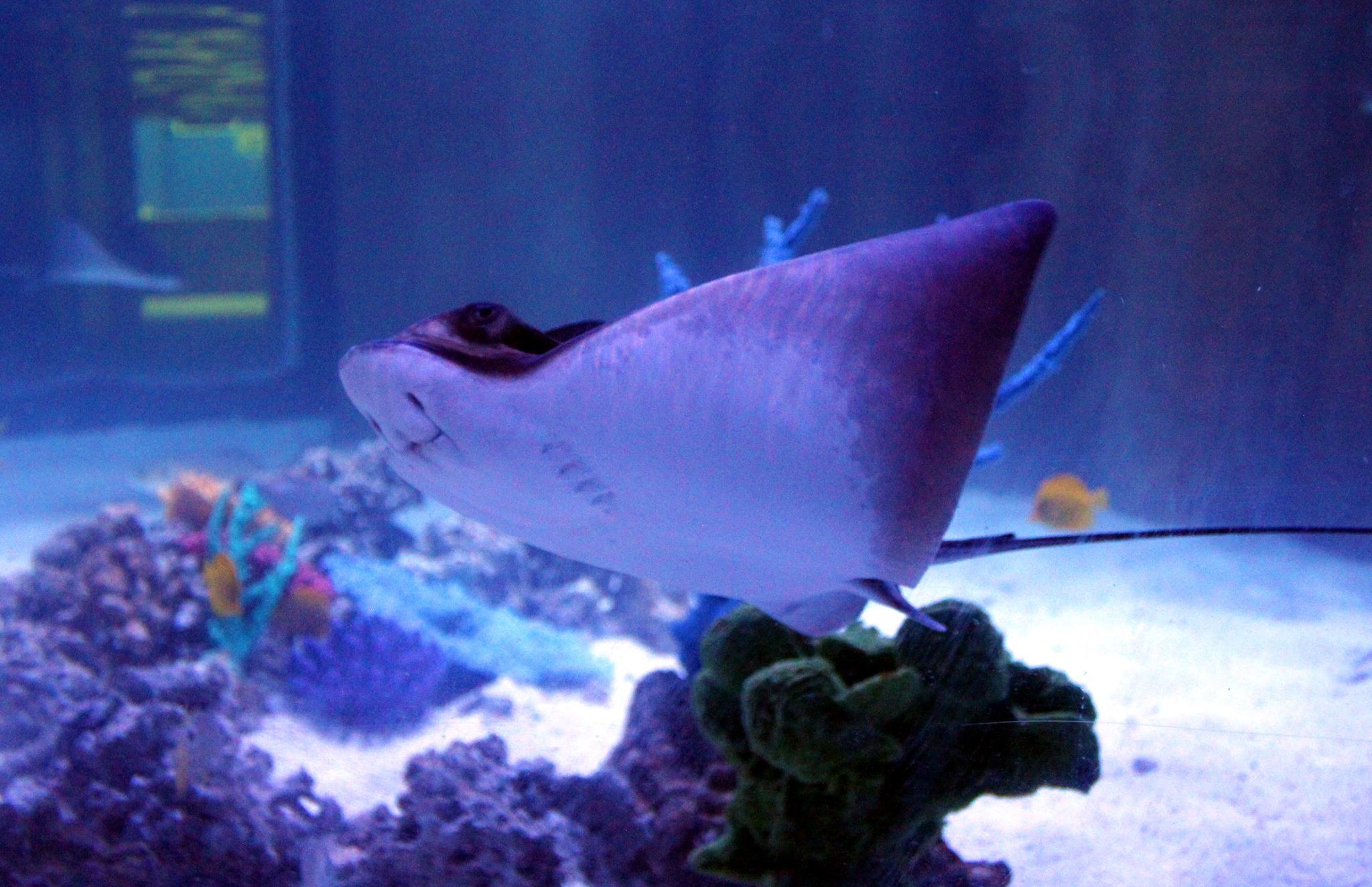Austin Aquarium Gives Special Gift To Texas Foster Children