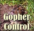 gopher control, gopher exterminators, gopher extermination