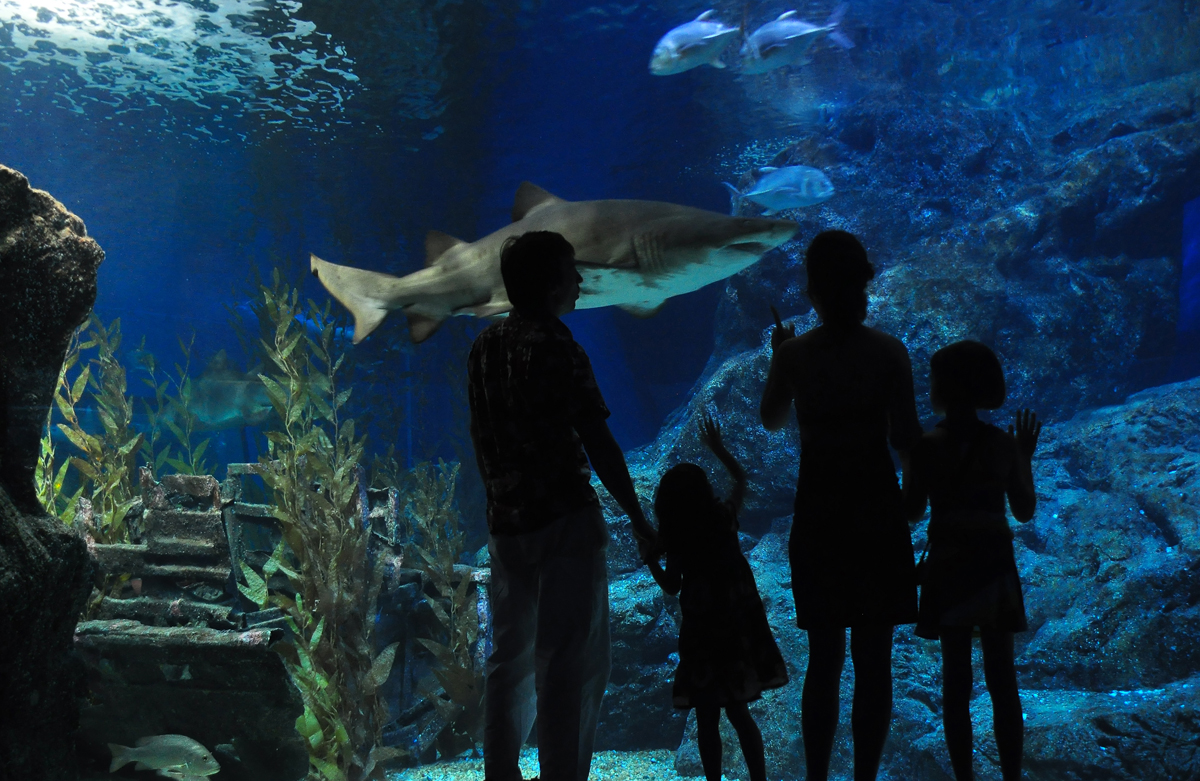 Austin Aquarium Gives Away 100 Family Passes To Less Fortunate