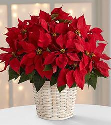 Atlanta Christmas Flowers