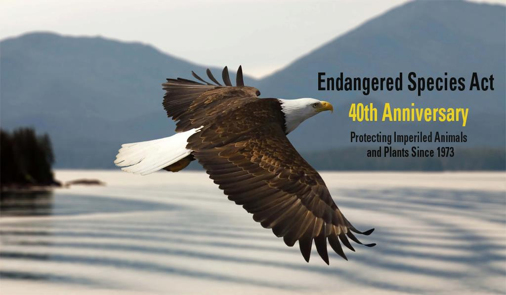 amendments is the government protections for the imperiledendangered species essay