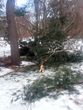 Philadelphia Homeowners Need to Take Action Now and Giroud Tree and...
