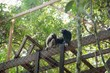 Wildlife Alliance Conducts Successful Release of Endangered Gibbons at...