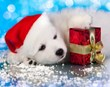 Animal Behavior College's 2014 Pet Lovers Holiday Gift Guide