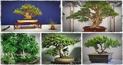 how to care for bonsai trees review