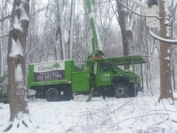 Tree Damage Can Be Prevented With Cabling:  A Giroud Tree and Lawn crew works to remove  a giant tree that split and crashed across a driveway during a snowstorm.