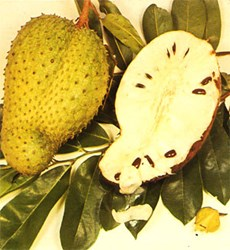 Platinum Soursop Review