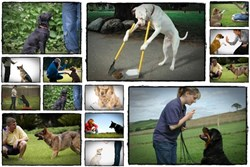 The Online Dog Trainer | how to train a dog