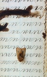 """""""Letters"""" by Lasse Antonsen"""