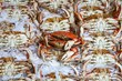 Pure Food Fish Market's Dungeness Crab Wall