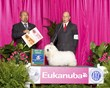 Hopecrest's MOnkey Business, CM10 takes Best of Breed Eukanuba 2012