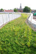 Green Roof, Hamline University, St. Paul, Minn.