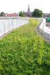 Green Roof, Hamline University, St. Paul, Minn.