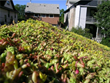 Residential Green Roof, Marcy Holmes Neighborhood, Minneapolis, Minn.