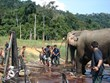 Keepers helping an Elephant to land