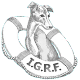 Humane Rx Card Benefits the Italian Greyhound Rescue Foundation.