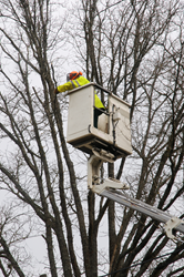 Winter Pruning, tree care, shrub care, Senske Services, Senske Lawn and Tree Care
