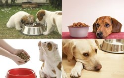 Dog Food Secrets Review | Dog Food Secrets