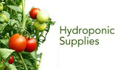 Grow Lights and Hydroponic Supplies available at 1000Bulbs.com