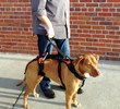 Blue Dog Designs Launches Dog Walking Accessories For The Help 'Em™ Up...