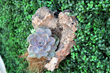 Geranium Street Announces Addition of Hybrid Living Walls to Its Product Line