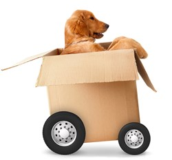 TRC Illustrates Stress-less Moving for your Pets